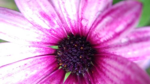 Macro lens flower